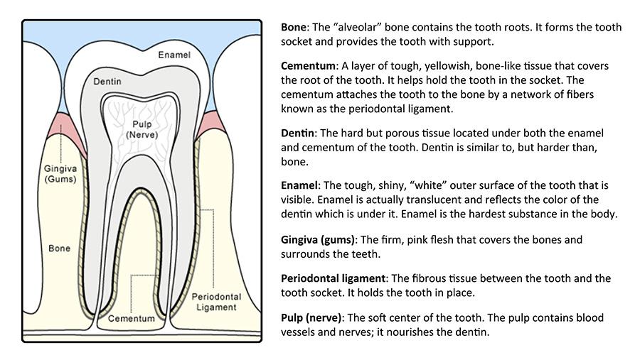 Teeth For Life Dentist Bend Or Bend Dental Group